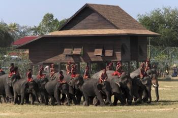 수린 코끼리축제